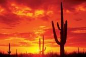 Arizona Bill To Legalize Marijuana