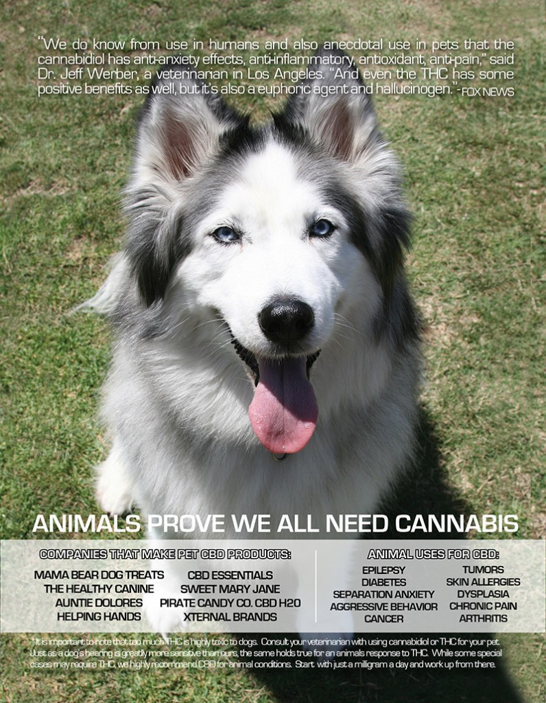 EDIBLES_MAGAZINE_CBD_AND_ANIMALS