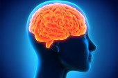 Top 10 Brain & Hormone Effects of Marijuana