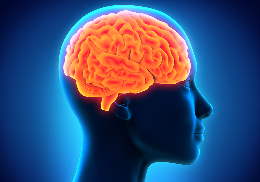 Top 10 Brain and Hormone Effects of Marijuana