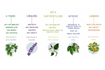 TERPENES FOUND IN CANNABIS