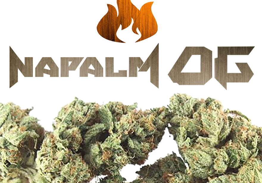 Xzibit's Napalm OG Review