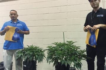Cannabis Plants at Oregon State Fair