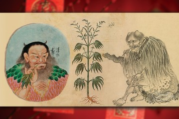 Cover Story: The History of Cannabis Began in China