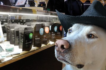 Cannabis For Canine Lovers: Washington Cultivator Partners with Local Pet Rescue