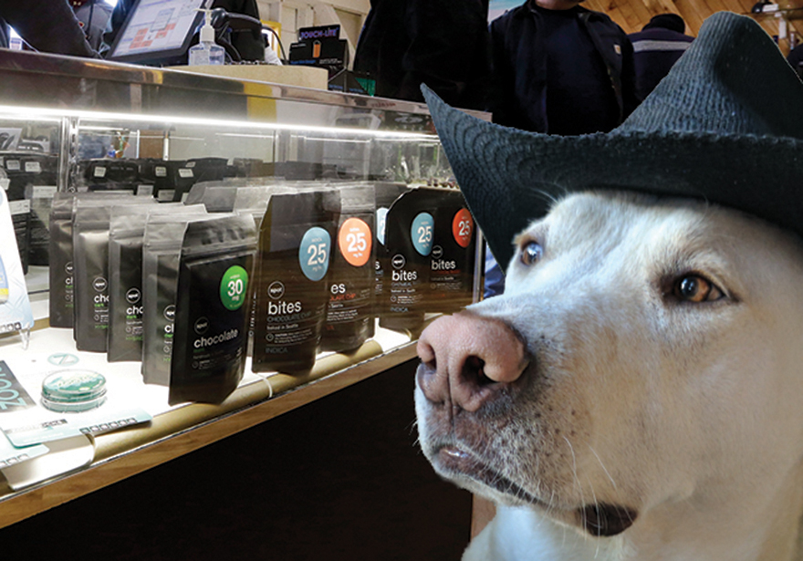 Cannabis For Canine Lovers