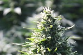 Talkin Topicals with Gar: Your Cannabis Topicals Questions Answered