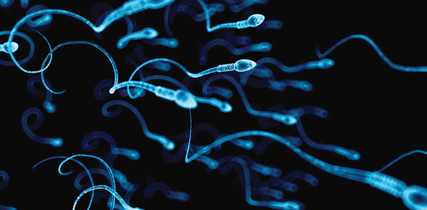 Marijuana Myth Busted - Cannabis use lowers sperm count - Edibles Magazine Article