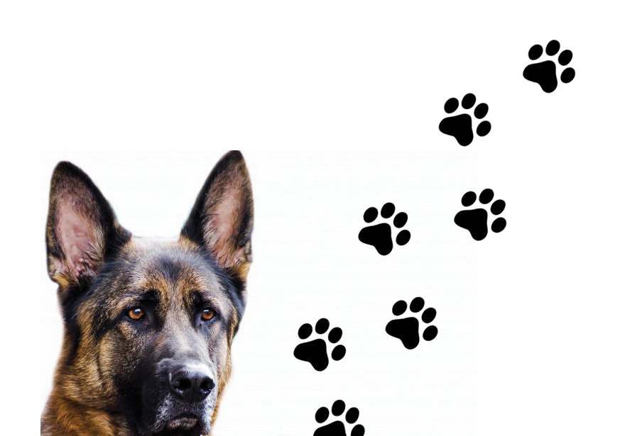 No Country for Old Dogs - You Can't Teach an Old Dog New Laws - Canine Units Face Retirement As Legal Marijuana Looms