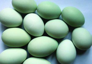 Edibles-Magazine-Top-7-Aphrodisiacs-Eggs