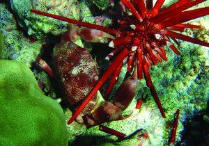 Edibles-Magazine-Top-7-Aphrodisiacs-Sea-Urchin