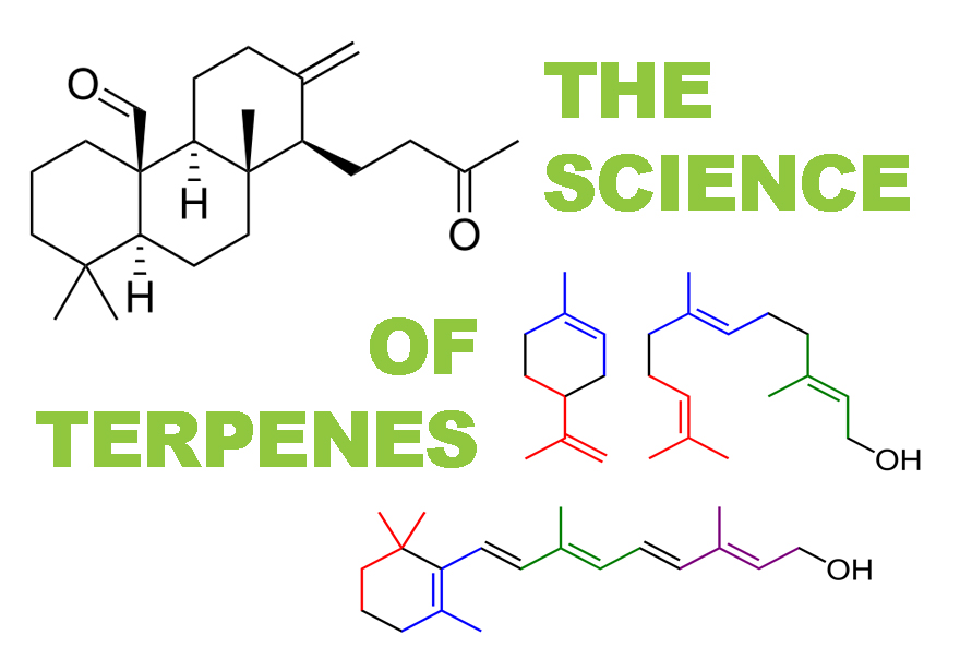The Health Benefits of Terpenes