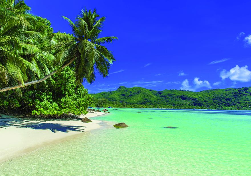 Edible's Magazine Bahamas Legalization
