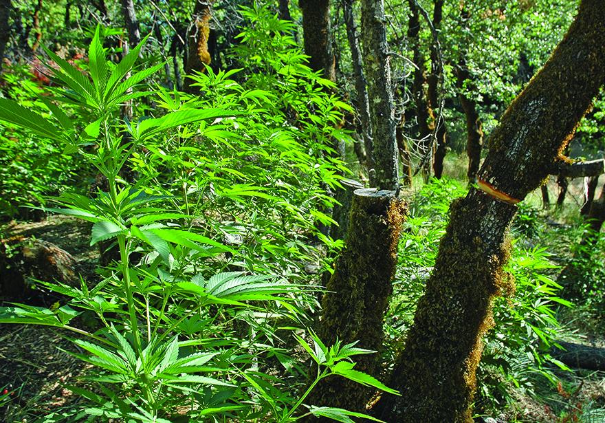 Edible's Magazine Cannabis National Parks