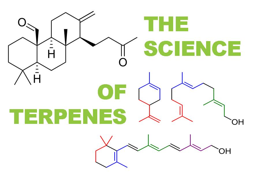 The Health Benefits of Terpenes